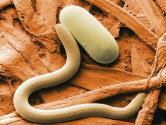 борьба с паразитами