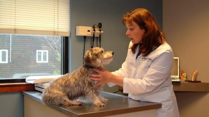 Лучшие ветеринарные клиники Москвы